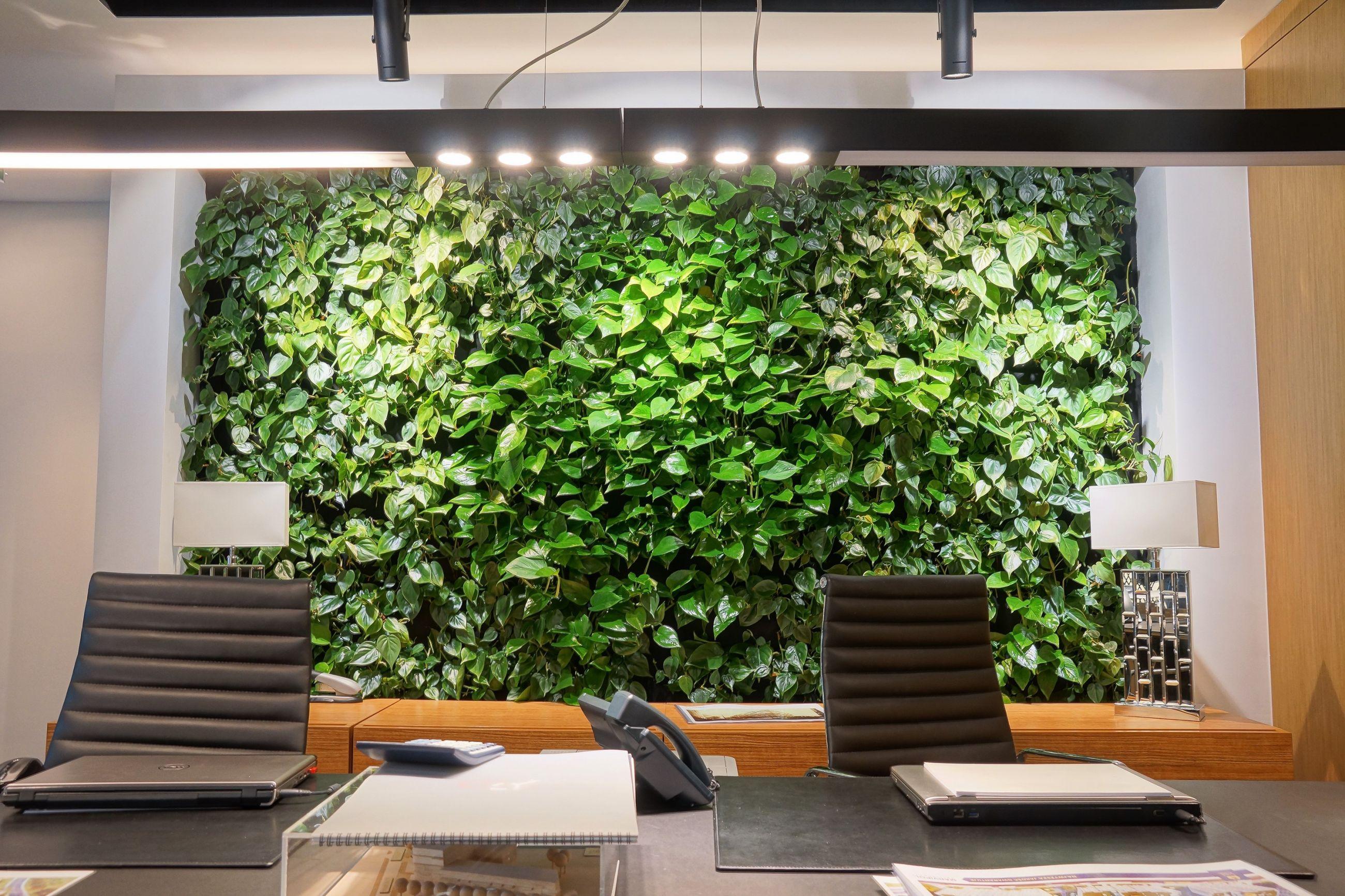 Zielona ściana w biurze firmy Apricot