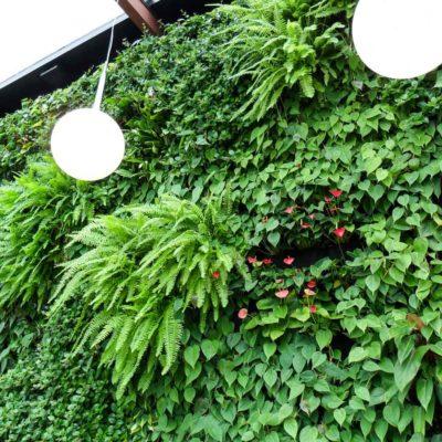 Ogród-zimowy-Galeria-Mokotów-zielona-ściana-11.jpg