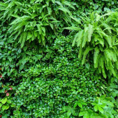 Ogród-zimowy-Galeria-Mokotów-zielona-ściana-7.jpg