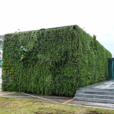 USP-zdrowie-mobilna-zielona-ściana-ogród-wertykalny-5.jpg