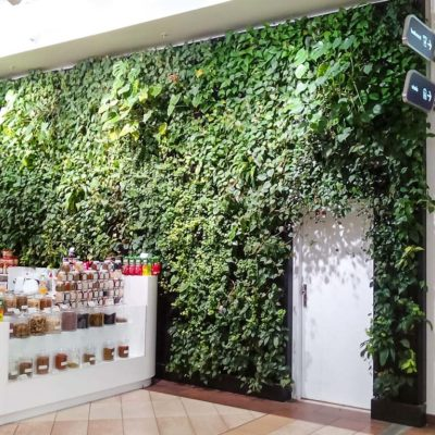 Zielona-ściana-przy-stoisku-w-Galerii-Mokotów-2.jpg