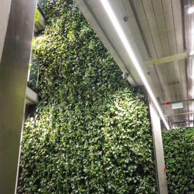 Zielona-ściana-w-Szucha-Premium-Offices-2.jpg
