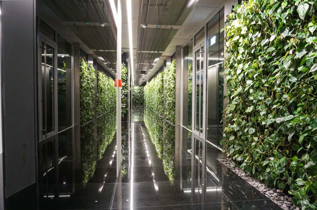 Zielona ściana w biurze Szucha Premium Offices