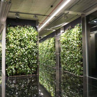 Zielona-ściana-w-Szucha-Premium-Offices-5.jpg