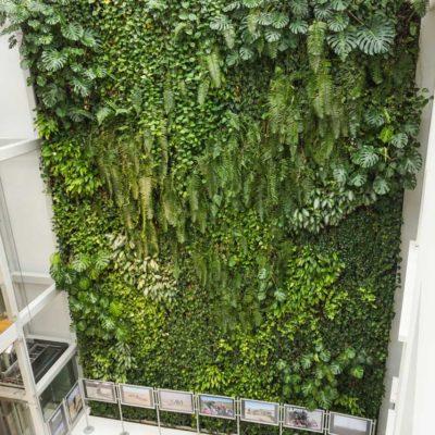 Zielona-ściana-w-bibliotece-na-koszykowej-w-Warszawie-2.jpg