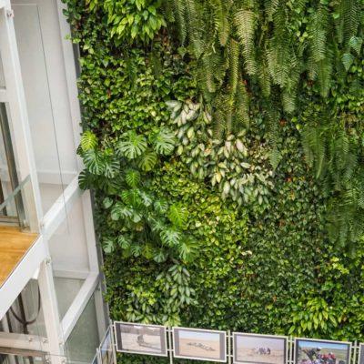 Zielona-ściana-w-bibliotece-na-koszykowej-w-Warszawie-4.jpg
