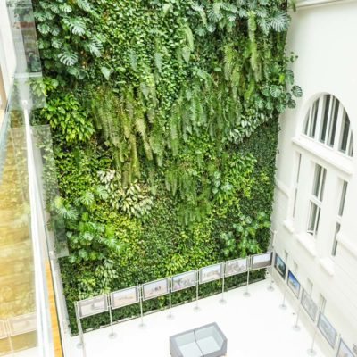 Zielona-ściana-w-bibliotece-na-koszykowej-w-Warszawie.jpg