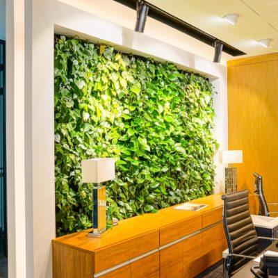 Zielona-ściana-w-biurze-Apricot.jpg