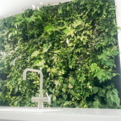 Zielona-ściana-w-biurze-BauschLomb-4.jpg