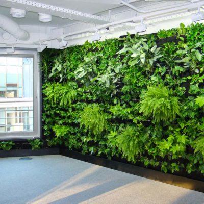Zielona-ściana-w-biurze-BauschLomb-6.jpg