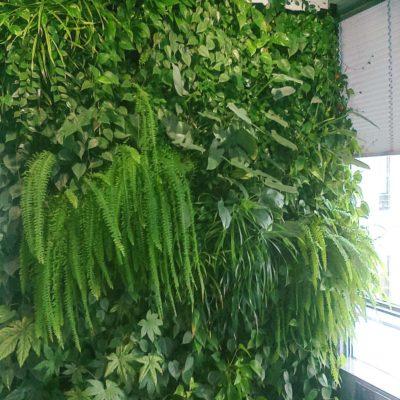 Zielona-ściana-w-biurze-BauschLomb-7.jpg