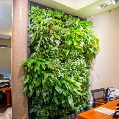 Zielona-ściana-w-biurze-Red-Bull-3.jpg