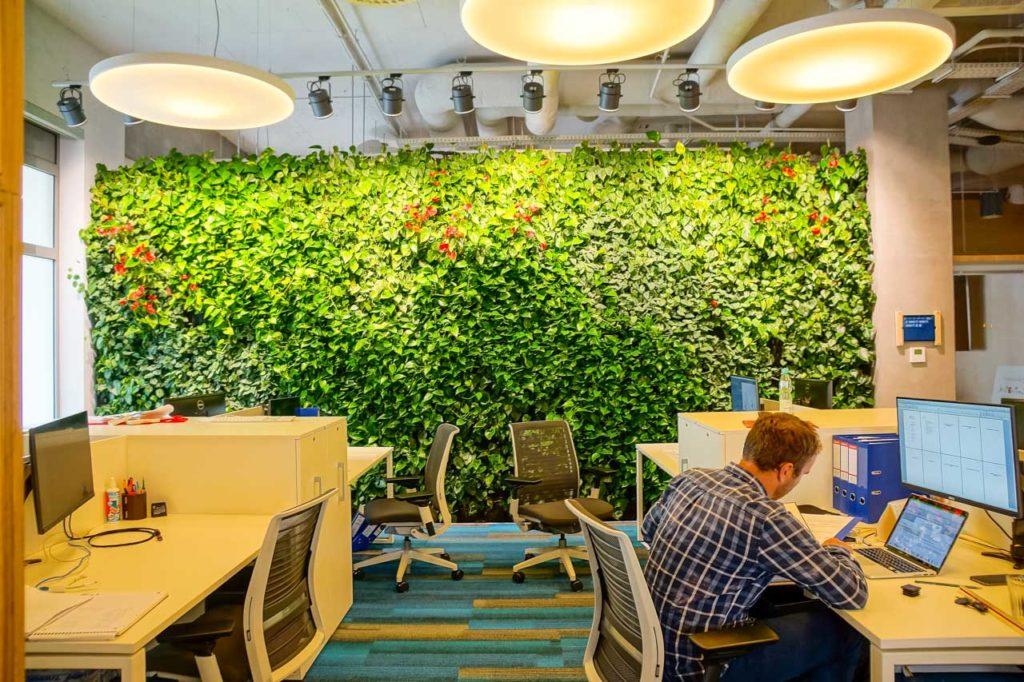 Zielona ściana (ogród wertykalny) w biurze firmy Muniek
