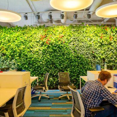 Zielona-ściana-w-biurze-firmy-Muniak-2.jpg