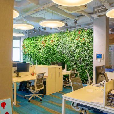 Zielona-ściana-w-biurze-firmy-Muniak-3.jpg
