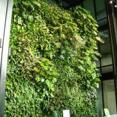 Zielona-ściana-w-recepcji-biura-Eurocentrum-2.jpg