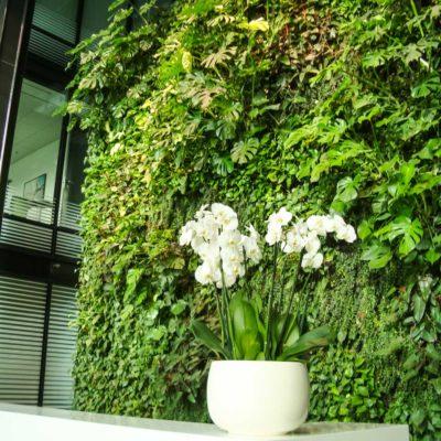 Zielona-ściana-w-recepcji-biura-Eurocentrum-3.jpg