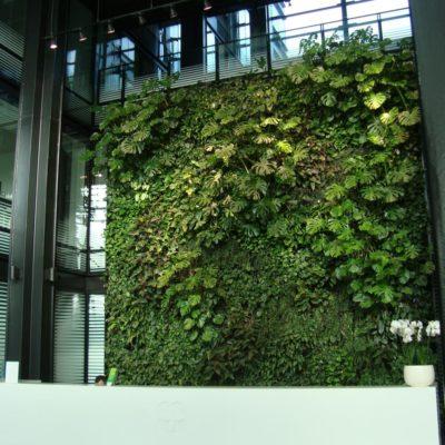 Zielona-ściana-w-recepcji-biura-Eurocentrum-4.jpg