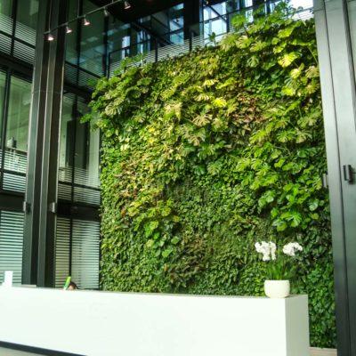 Zielona-ściana-w-recepcji-biura-Eurocentrum-5.jpg