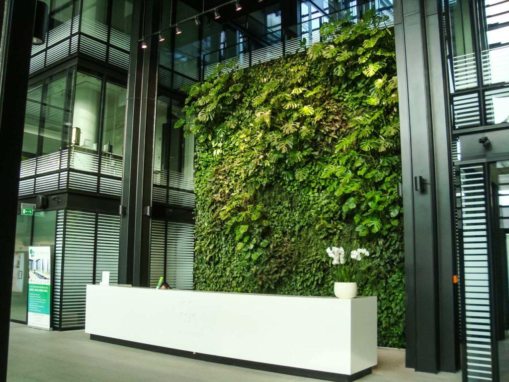 Zielona ściana w recepcji biura Eurocentrum