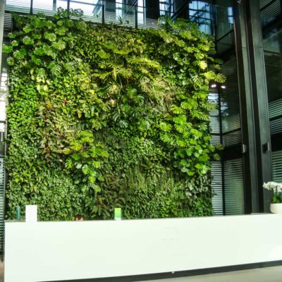 Zielona-ściana-w-recepcji-biura-Eurocentrum-7.jpg
