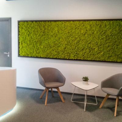Zielona-ściana-z-chrobotka-w-biurze-Libertech-2.jpg