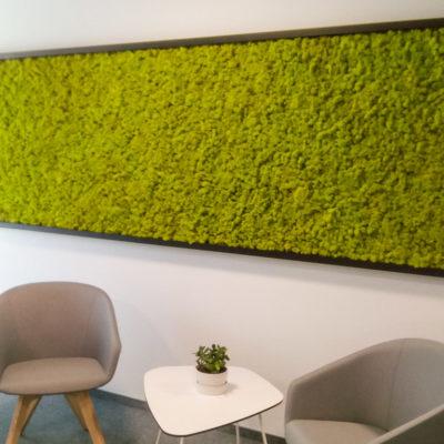 Zielona-ściana-z-chrobotka-w-biurze-Libertech-4.jpg