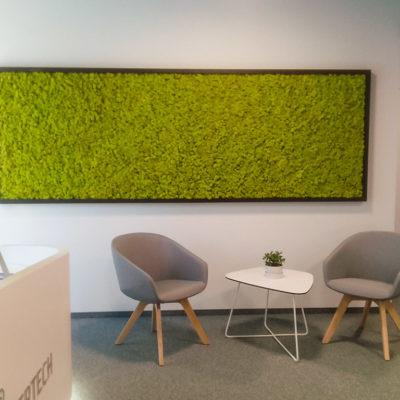 Zielona-ściana-z-chrobotka-w-biurze-Libertech-5.jpg