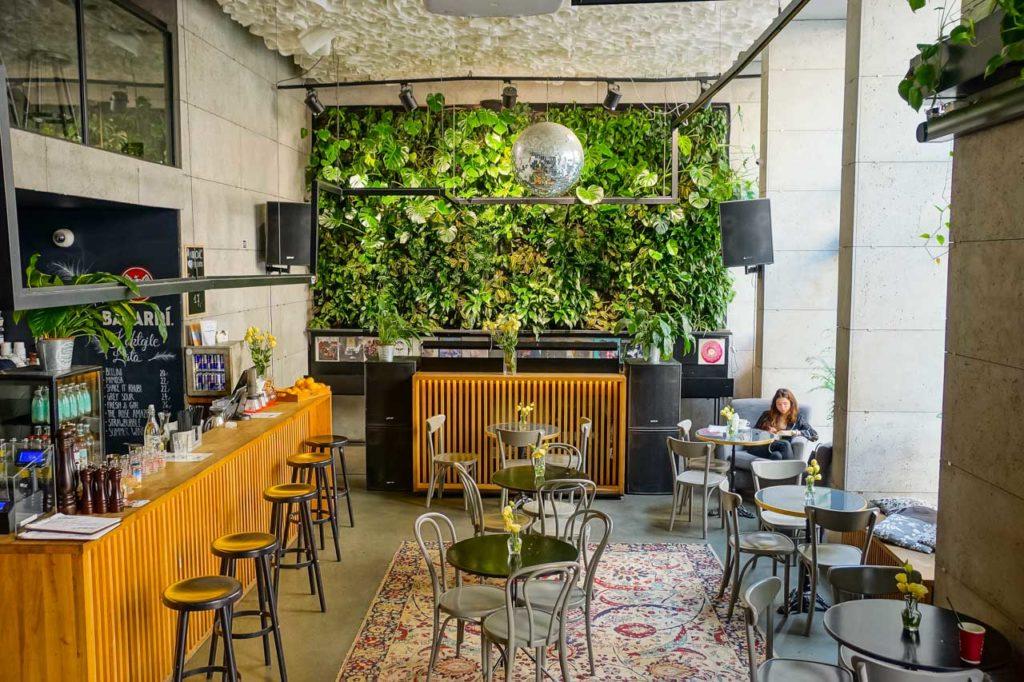 Żywa zielona ściana w klubokawiarni Miłość