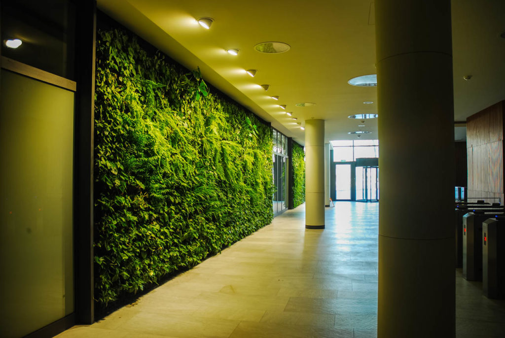 Zielona ściana (ogród wertykalny) w biurowcu Kotlarska 11