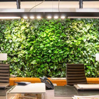 zielona-ściana-w-biurze-Apricot-2.jpg