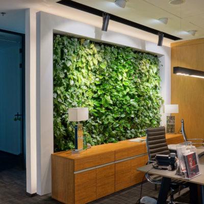 zielona-ściana-w-biurze-Apricot-3.jpg