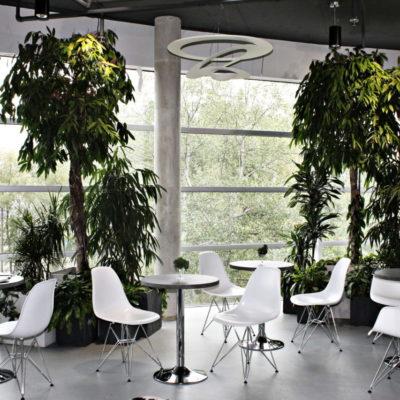 Biuro-Pini-aranżacje-roślinne--e1544385519658.jpg