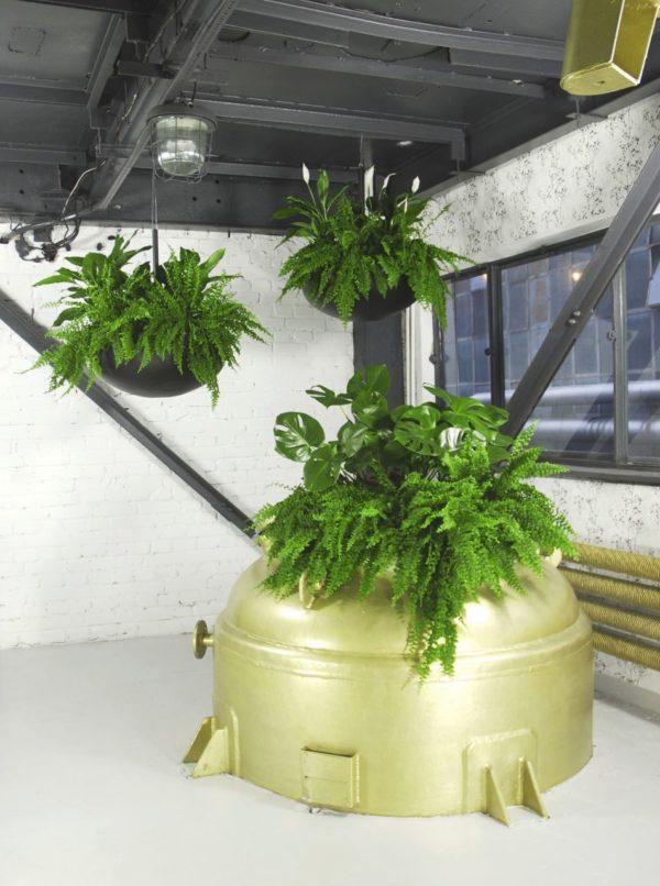 Zielone rośliny w biurze